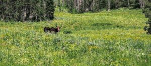 Moose Pass - Teton Crest Trail - Two Guys in the Woods