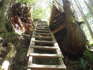 Our first ladder - West Coast Trail 2015