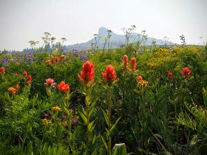 Indian Paintbrush Flowers - Teton Crest Trail - Two Guys in the Woods