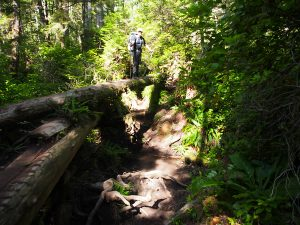 Elf standing over a ravine Crossing on the West Coast Trail 2015