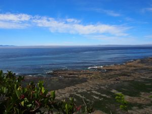 View of the Pacific Ocean - West Coast Trail 2015