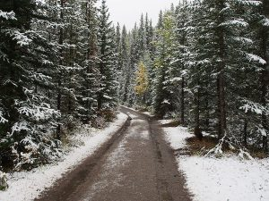 Fire roads in the snow